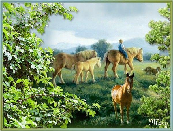 Une petite promenade à cheval !!!