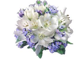 Bon Mardi Blanc-et-mauve