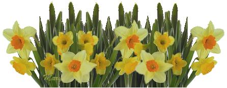 Un vase de jonquilles des fleurs de printemps for Decoration de grand vase transparent