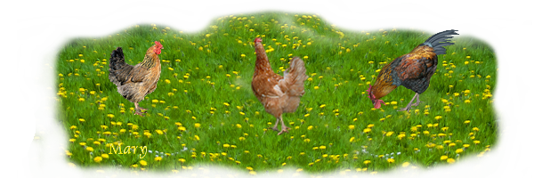 Bon Mardi Les-poules