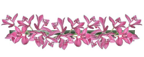 Barras Separadoras..... - Página 6 Orchidee