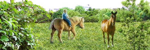 promenade-cheval.png